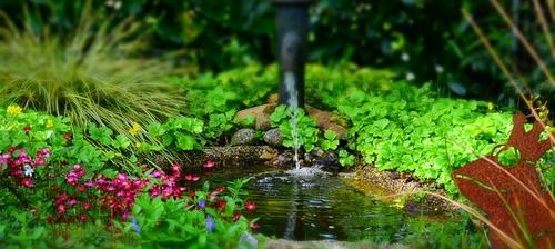 Bassin et changement d\'eau - KOI by KOI